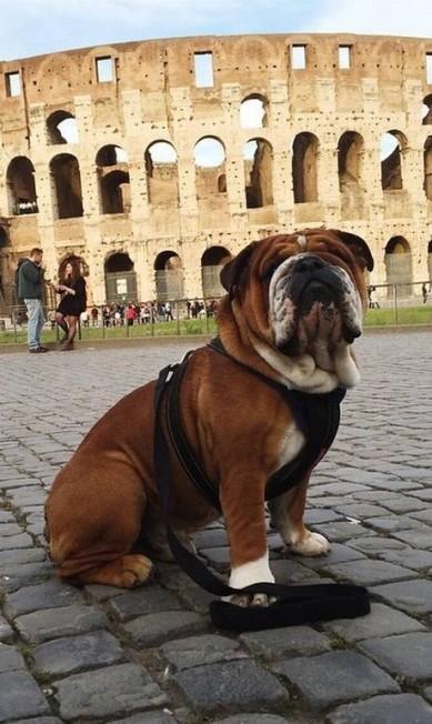 Roscoe em Roma Reprodução/ Instagram