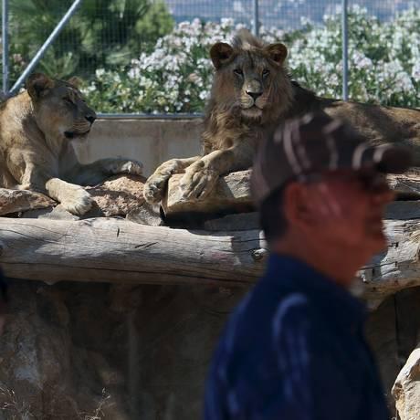 Visitantes caminham em frente à área dos leões, no zoológico de Atenas Foto: YIANNIS KOURTOGLOU / REUTERS