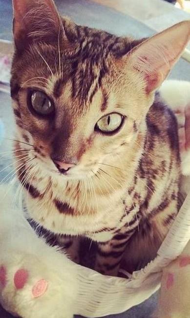 Mais um clique do gato de Kourtney Kardashian Reprodução/ Instagram