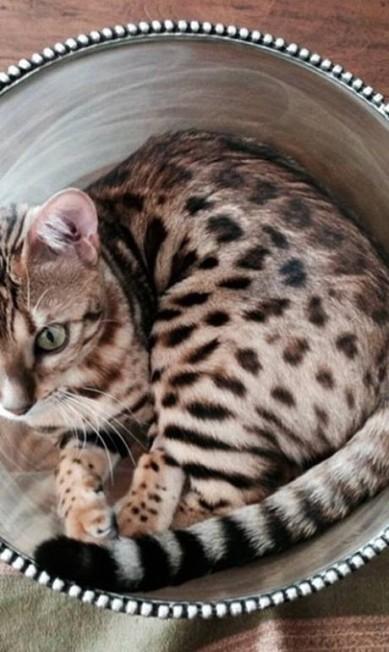 Kourtney Kardashian, irmã de Kim, é mais uma que ama gatos Reprodução/ Instagram