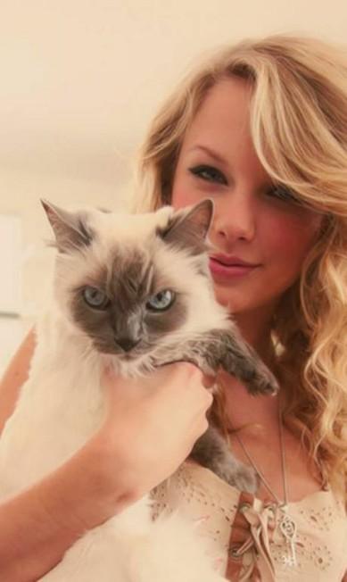 A cantora Taylor Swift é outra apaixonada pelo felino Reprodução