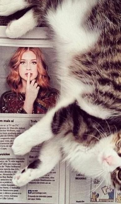 Os gatos são a nova obsessão das celebridades. Basta dar uma olhadinha no Instagram para comprovar a tese. Marina Ruy Barbosa é uma das amantes do felino Reprodução/ Instagram
