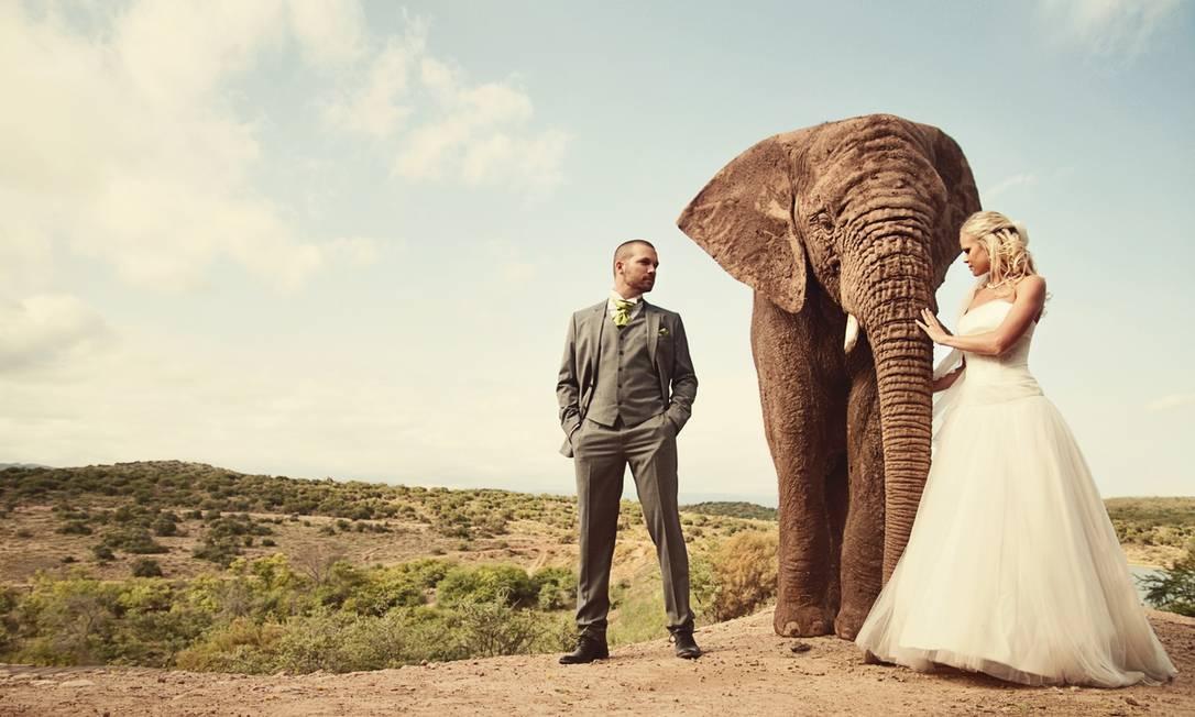 Quem disse que álbum de casamento precisa ser careta? Cada vez mais, casais têm inovado na hora de retratar o dia especial. O 'Huffington Post' reuniu alguns dos noivos que fizeram sucesso na web com imagens criativas. Nesta foto, o cenário escolhido foi a África do Sul, com direito a um elefante entre a noiva e o noivo! Amanda Kopp Images