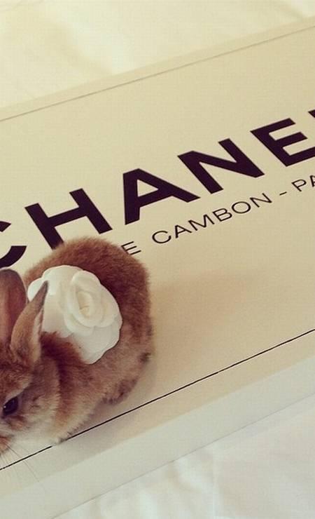 Cecil parece gostar de moda. Além de posar dentro da bolsa Mulberry, o coelho tem sua própria camélia da Chanel Foto: Reprodução/ Instagram
