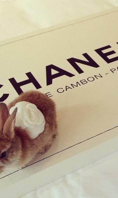 Cecil parece gostar de moda. Além de posar dentro da bolsa Mulberry, o coelho tem sua própria camélia da Chanel Reprodução/ Instagram