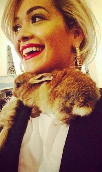 Cecil Bunny também faz amizades com famosos e faz questão de mostrar tudo em sua página. No clique, o coelho aparece com a cantora Rita Ora, que já foi apontada como namorada de Cara Reprodução/ Instagram