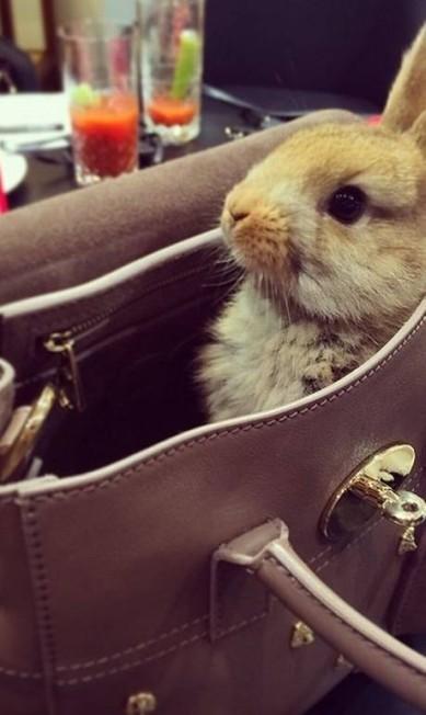Cecil posando com sua bolsa Mulberry, da qual Cara é garota-propaganda Reprodução/ Instagram