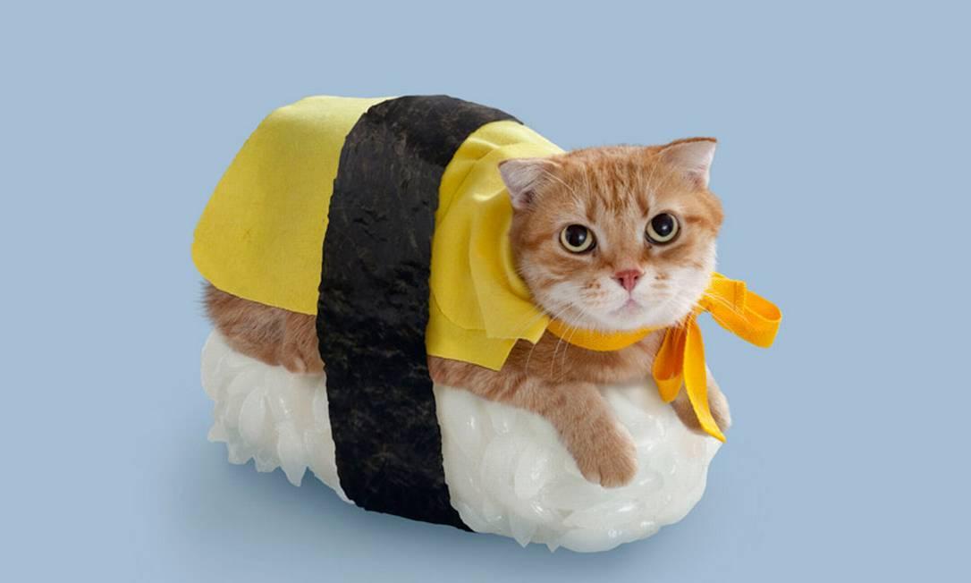 Já este gatinho ganhou uma charmosa capinha amarela Divulgação / nekozushi.com