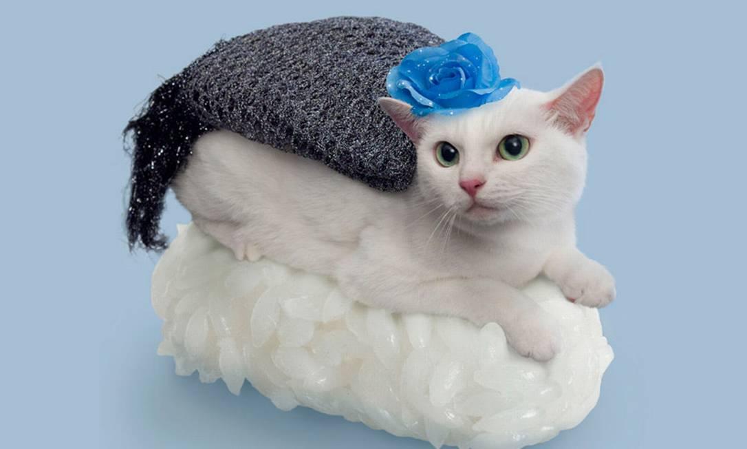Para ficar mais elegante, esta gatinha recebeu uma flor sobre a cabeça Divulgação / nekozushi.com