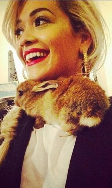 A coelha também já foi clicada ao lado da cantora Rita Ora Reprodução / Instagram