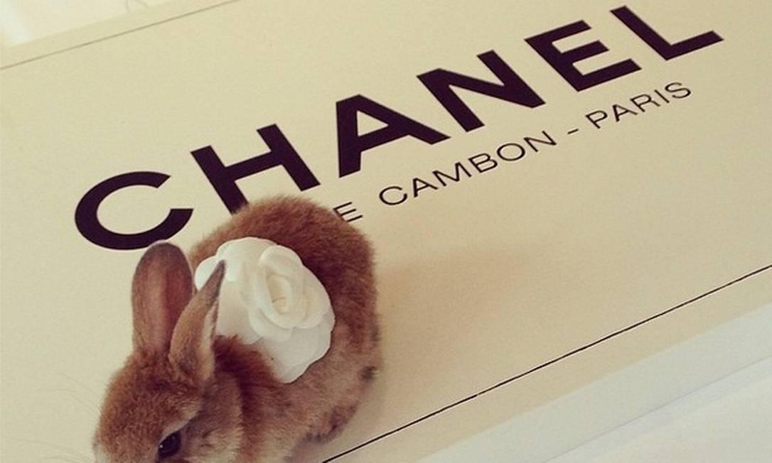 Cara fotografou a coelhinha sobre uma caixa da Chanel. O que será que havia dentro? Reprodução / Instagram