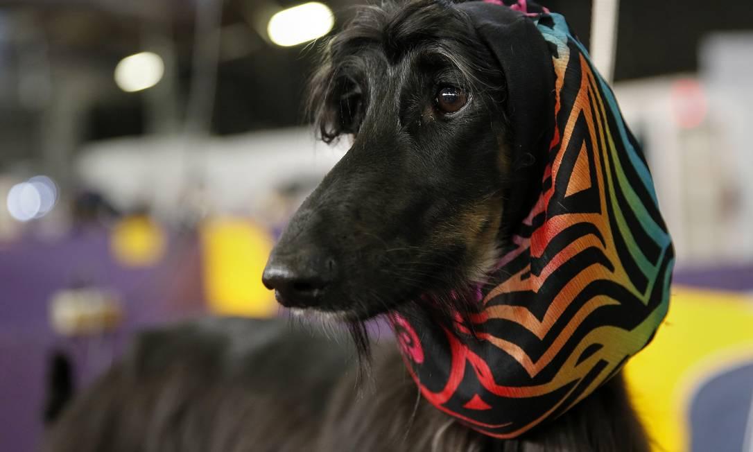 A Abbs, cadelinha Afghan Hound, de raça originária do Afeganistão, ganhou um véu ultracolorido SHANNON STAPLETON / Reuters