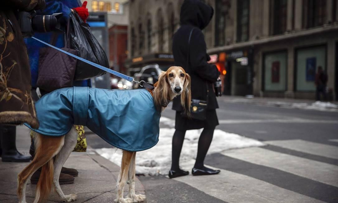 Antes mesmo de chegar à competição, o cão da foto mostra que não lhe falta estilo, com sua capa de chuva SHANNON STAPLETON / Reuters