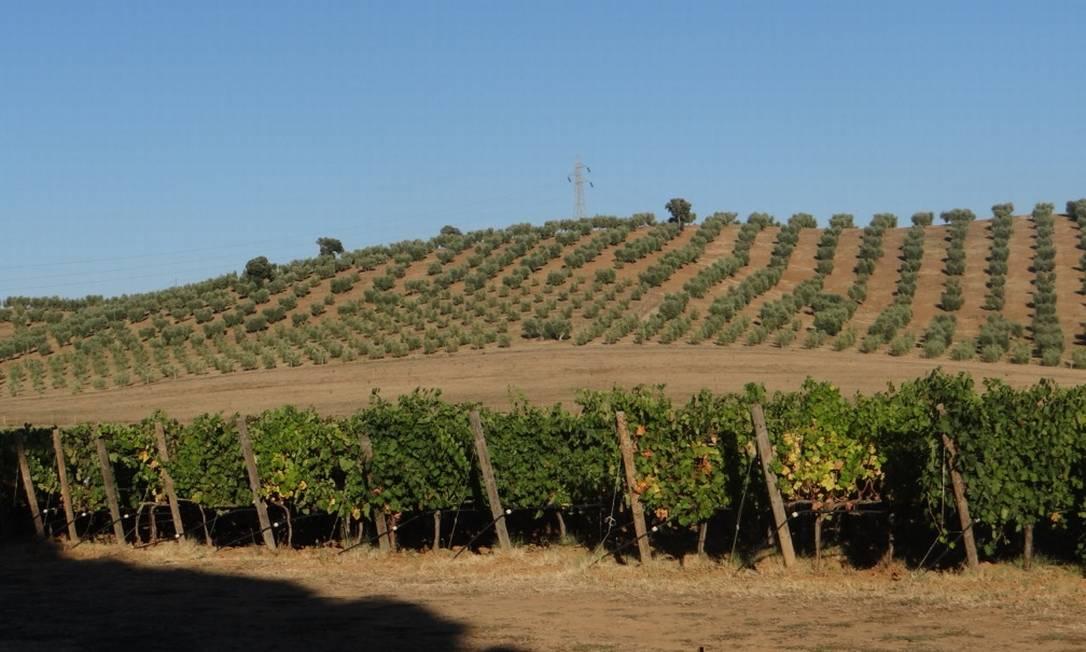 As plantações de uvas e azeitonas dão um ar especial à região Renata Araújo