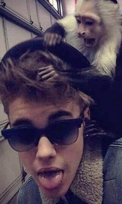 Em março, o astro pop Justin Bieber, de 19 anos, ganhou um macaco-prego albino de presente Terceiro / Reprodução