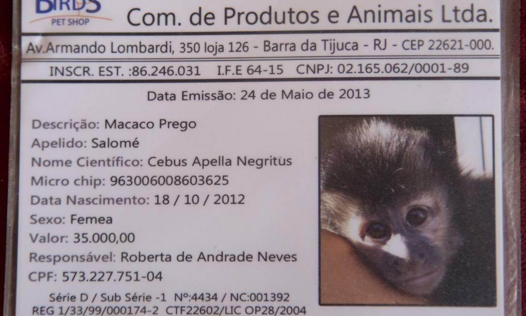 Ela tem até carteira de identidade... Simone Marinho / Agência O Globo