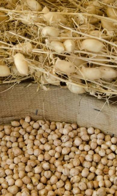 O grão-de-bico é dos grãos mais usados na região Giuseppe Puppo