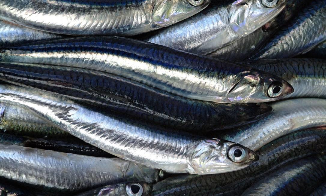 Anchovas e outros peixes de carne escura vêm do Mar Tirreno Giuseppe Puppo