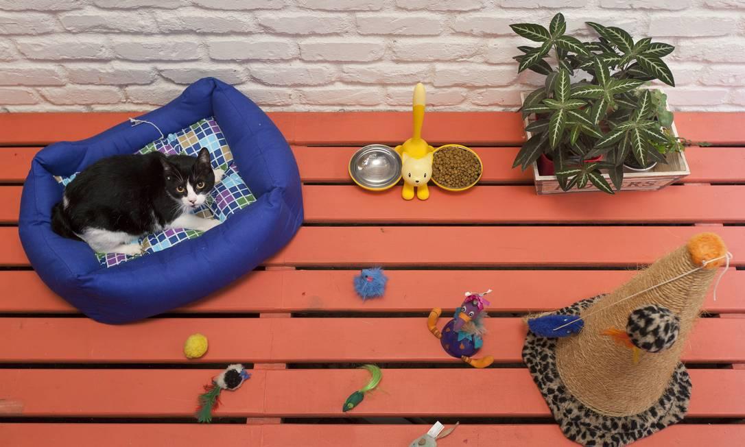 A gatinha Amy tem lugar para brinquedos, arranhador e pratinho de grife Leo Martins / O Globo