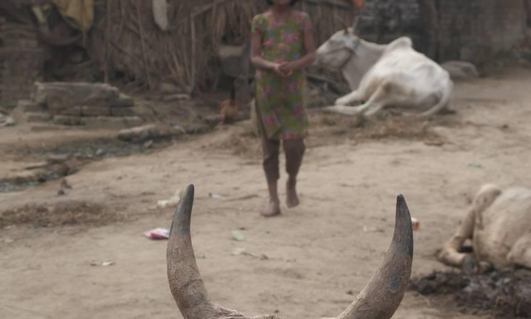 No Nepal, animais que ajudam na alimentação de famílias inteiras estão morrendo por causa da seca Helena Christensen / Helena Christensen/Oxfam