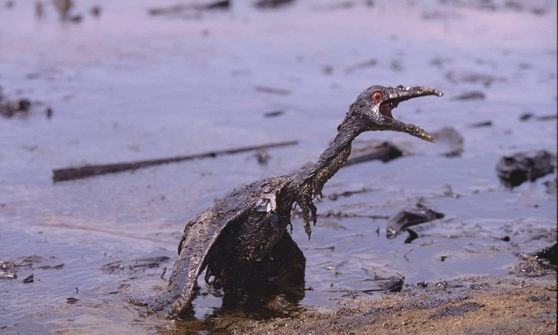 Agressão à natureza. Um mergulhão agoniza na Praia de Mauá, em Magé, após o vazamento de 1,3 milhão de litros de óleo de um duto da Petrobras, na Baía de Guanabara, em 18 de janeiro de 2000. A foto ganhou os prêmios Líbero Badaró e Firjan Domingos Peixoto / O Globo