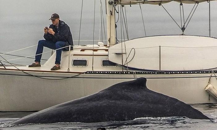 baleia Foto: Reprodução/Instagram