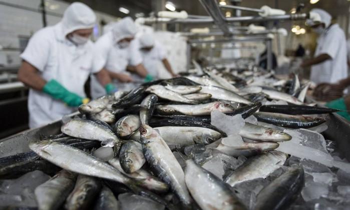 Ministério debate suspensão da exportação de pescado à UE com o setor