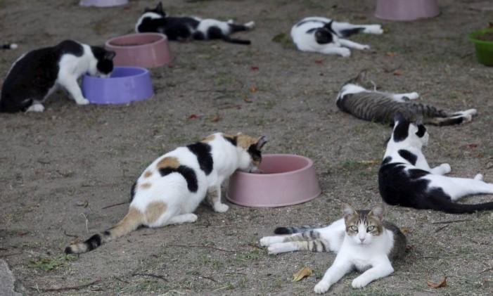 Gatos na Fazenda Modelo em Guaratiba Foto: Gustavo Stephan em 20/03/2014 / Agência O Globo