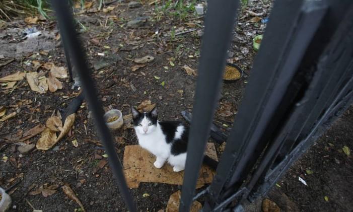 Gato em terreno no Recreio Foto: Luiz Ackermann / O Globo