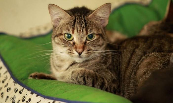 Gato sobre almofada Foto: Márcio Alves / O Globo