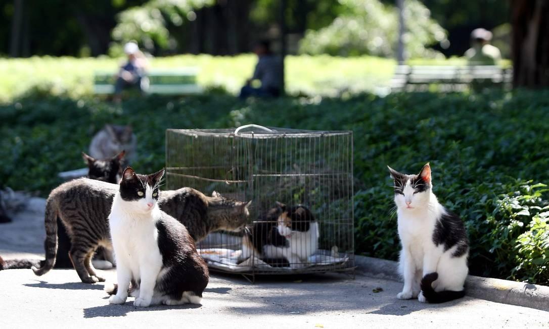 Gatos no Campo de Santana, no Centro Foto: Felipe Hanower / Agência O Globo