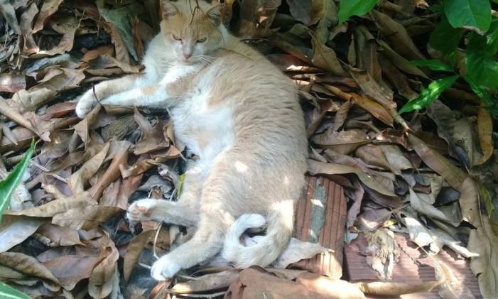 A gata Cara Suja descansa no quintal Foto: Divulgação
