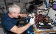 O astronauta Steve Swanson colhe alface romana cultivada a bordo da Estação Espacial Internacional