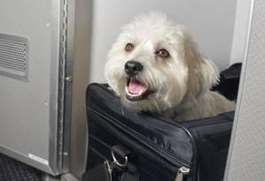 Rede de hotéis amplia aceitação de animais Foto: Divulgação
