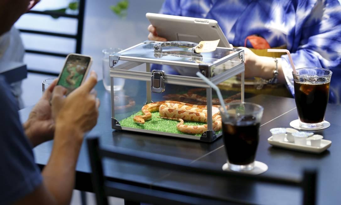 As cobras ficam dentro de caixas de vidro, que podem ser colocadas sobre as mesas TORU HANAI / REUTERS
