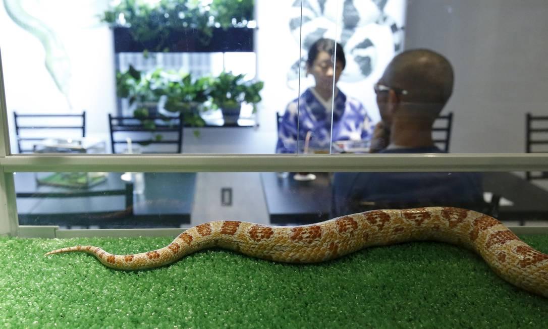 Clientes fotografados através do recipiente de uma das cobras que estão no local TORU HANAI / REUTERS