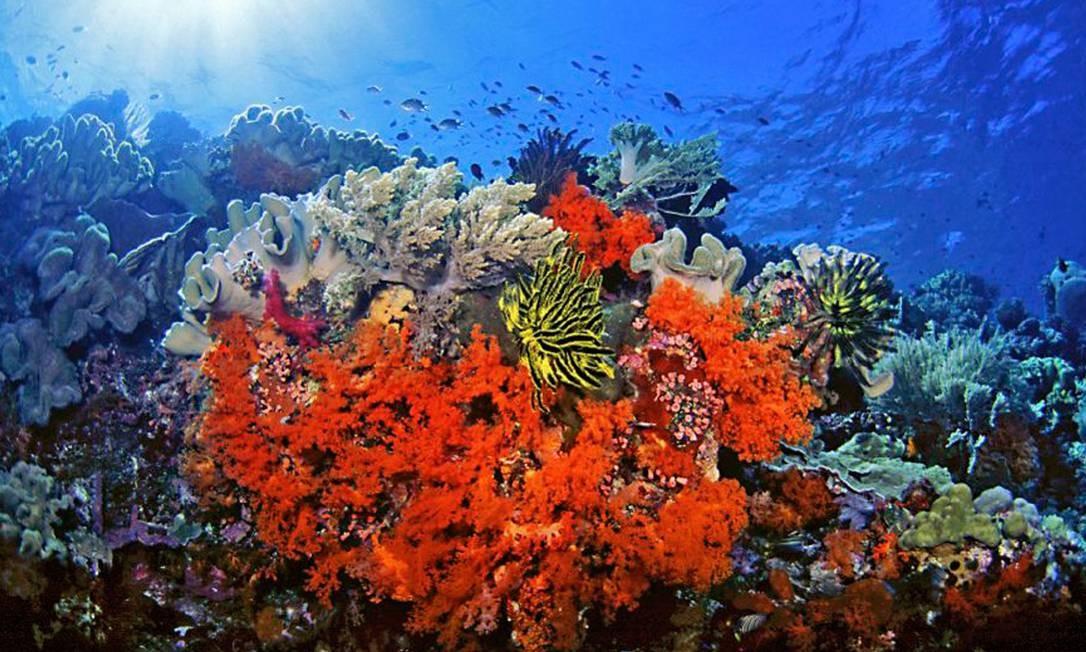 Corais: ecossistema em perigo iminente Foto: / Foto AP