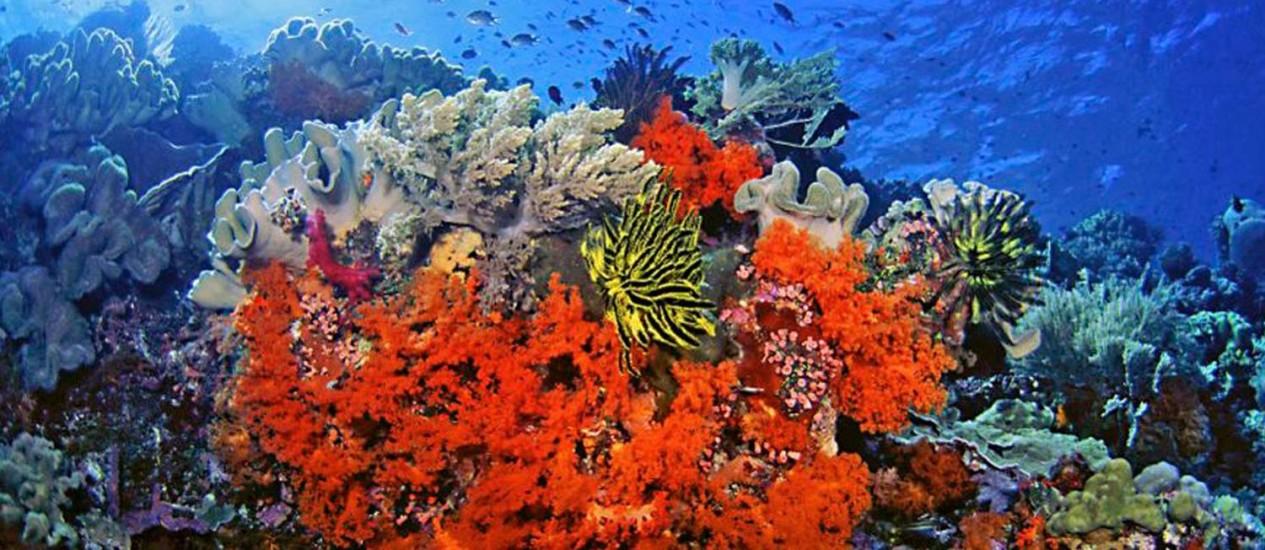 Corais: ecossistema em perigo iminente Foto: Foto AP