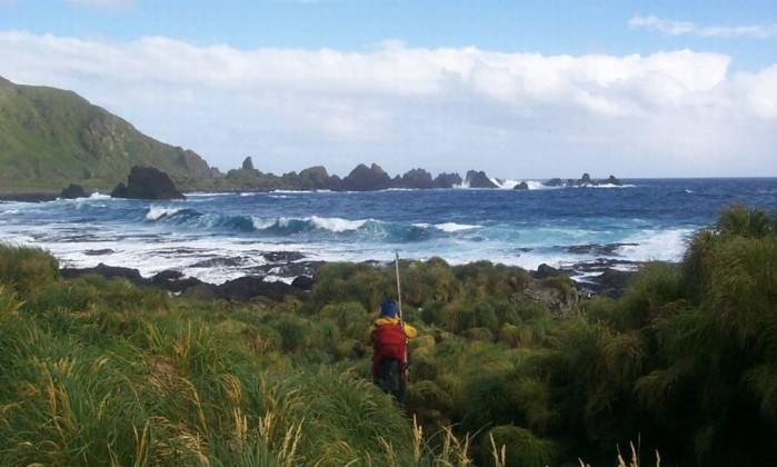 Resultado de imagem para Macquarie Island australia  08 setembro 2016