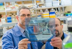Os pesquisadores Panos Anastasiadis e Antonis Kourtidis, autores do estudo Foto: DIVULGAÇÃO