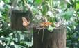 Borboletário é um dos destaques do Mangal