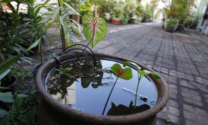 Vaso com plantas e água Foto: Guito Moreto / Agência O Globo