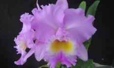 Homenagem. Planta híbrida recebe o nome de Fátima Bernardes Foto: Divulgação/Sandra Odebrech