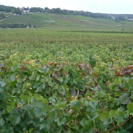 Vinhedo na região francesa da Borgonha. Climats locais receberam da Unesco o status de patrimônio da humanidade Foto: Wikimedia Commons