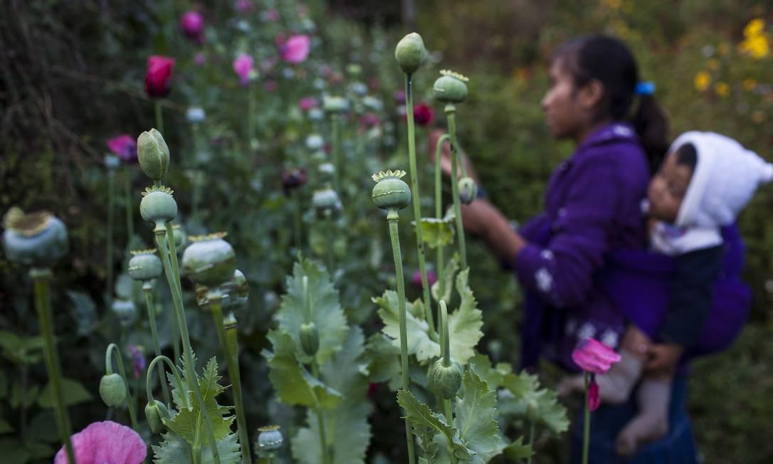 Uma mulher com seu filho nas costas recolhe papoulas para extrair ópio bruto em Xalpatlahuac, no México Foto: RODRIGO CRUZ / NYT
