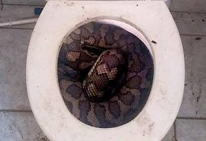 Cobras estão surpreendendo moradores Foto: Reprodução