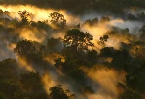 Queimada na Floresta Amazônica Foto: Peter van der Sleen / Arquivo