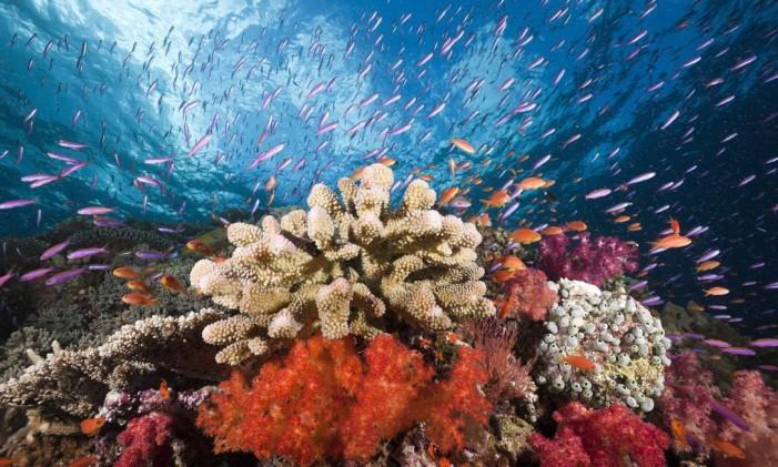 Coral Foto: Latinstock