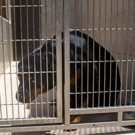 Rottweiler em clínica de Caracas: situação dos cães já vira ameaça Foto: Marco Bello / REUTERS