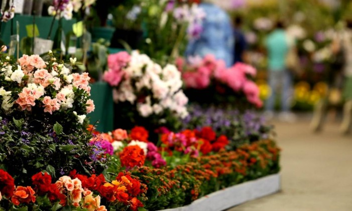 A Festa das Flores de Joinville Foto: Festa das Flores / Reprodução